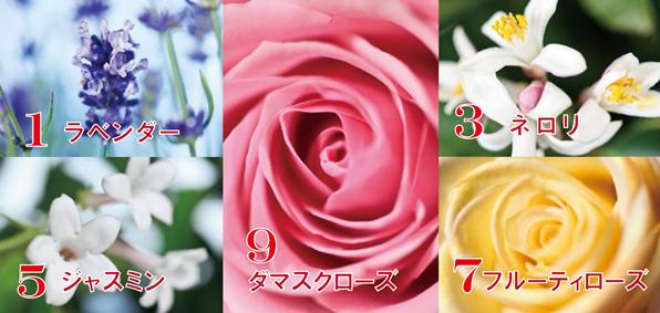 コタ 香り 596×283
